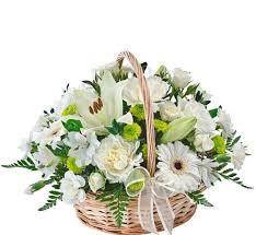 ivy florist tenderness