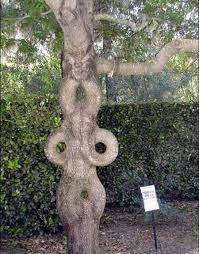 غرائب عجائب النباتات ربيع الخير