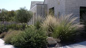 native plants to texas texas native plants landscaping u2014 paulele beach house