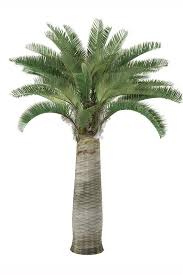 pictures of different types of palm trees lovetoknow