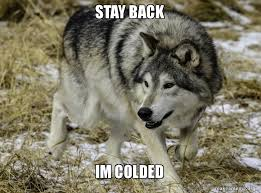 Wolf Memes - stay back im colded grey wolf memes make a meme
