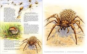 North Carolina wildlife images Amelia hansen illustration design wildlife in north carolina jpg