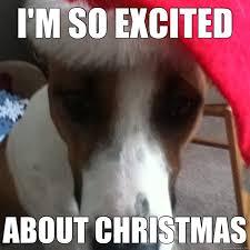 Christmas Dog Meme - funny christmas dog memes christmas pinterest dog memes