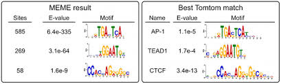 Meme Motif - tethering of the conserved piggybac transposase fusion protein csb
