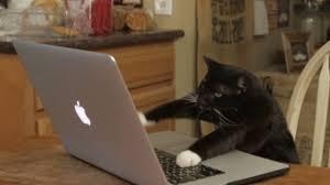 Cat Laptop Meme - aaron s animals facebook hacker youtube