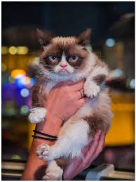 Happy Cat Meme - app shopper grumpy cat meme latest fun ny fat and happy cats