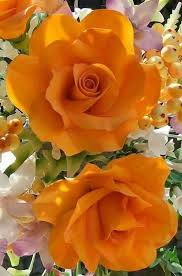 2380 best roses collection images on pinterest beautiful roses