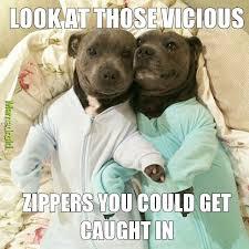 Pitbull Meme - pitbull love meme by kypitz memedroid