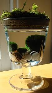 marimo and moss terrarium u2013 green obsessions