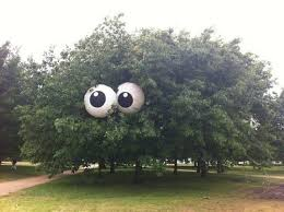 Googly Eyes Meme - someone put giant googly eyes in this tree eyebombing know