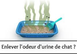 enlever odeur urine canapé comment enlever l odeur de pipi de des hommes et des chats