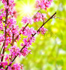 fresh pink blooming flowers on the tree in nature