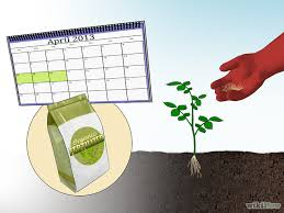 Garden Fertilizer Types - how to fertilize roses with pictures wikihow