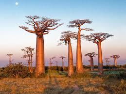 trees of the quiz britannica com
