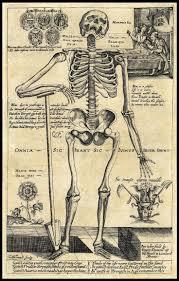 Halloween Skeleton Art 101 Best The Art Of Anatomy Images On Pinterest Human Anatomy