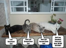Ceiling Cat Meme - i can has cheezburger ceiling cat funny animals online