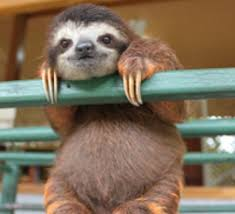 Make A Sloth Meme - all things sloth pictures and memes of sloths