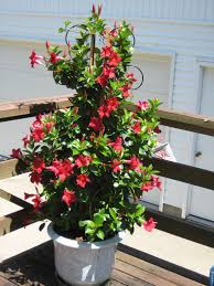Plants That Dont Need Sunlight by Mark Austin Homes Blog Archiv Sun Loving Container Plants