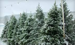 summit christmas tree farm san jose deal of the day groupon san jose