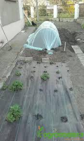 Mythos Silverline Greenhouse 48 Best Szklarnie I Tunele Foliowe Images On Pinterest