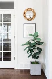 Living Room Designs For Small Houses by The Best Faux Plants And Where To Buy Them Fake Plants House