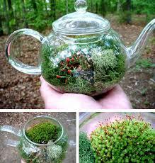 make a moss terrarium in glass teapot