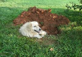 dogma by bart why dogs dig and how to stop it