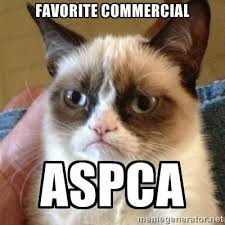 Aspca Meme - grumpy cat aspca aspca commercial parodies know your meme
