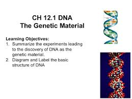 12 1 dna worksheet answers free worksheets library download and