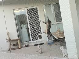 catsafe u2013 quality cat enclosures