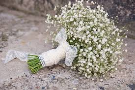 baby breath 1 ounce of baby s breath 24 thousand seeds easy to grow