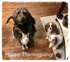 puppy thanksgiving oklahoma orphaned poodle services poodle rescue home facebook