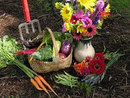 helpful advice when starting an organic vegetable garden welcome