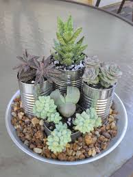 indoor succulent garden for the home pinterest 70 indoor and