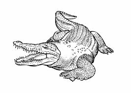alligator coloring pages page crocodile crocodile coloring pages animal coloring pages page