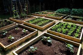 Vegetable Garden Bed Design by Vegetable Garden Bed Design And Layout Photos Homescorner Com