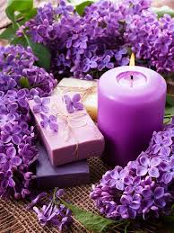 Colors Of Purple Best 25 Purple Lilac Ideas On Pinterest Lilac Flowers Purple