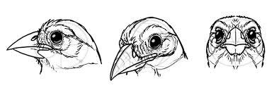 draw birds step step instructions