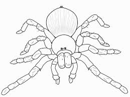 super design ideas spider outline printable template clip art