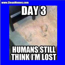 Lost Dog Meme - think i m lost clean memes the best the most online