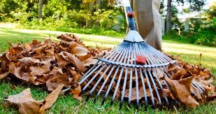 Fall Cleanup Landscaping by Local Landscaping Company Lawn Care Services Top Green