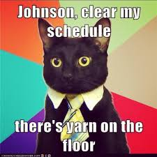 Business Cat Memes - cat meme cat memes pinterest memes and cat