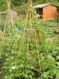 combining vegetables and flowers in your garden diy