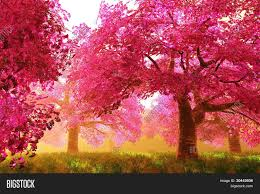 mysterious japanese cherry blossom image photo bigstock