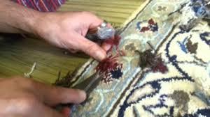 Oriental Rug Repair Persian Rug Repair Nain Repair Moth Damage Holes Youtube