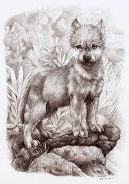 wolf cub by liedeke on deviantart wildlife wolf