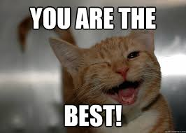 Sarcastic Cat Meme - you are the best sarcastic cat quickmeme