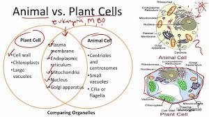 2 1 7 animal vs plant cells youtube
