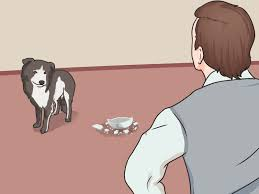 House Dogs by How To Introduce A New Dog To Your House And Other Dogs