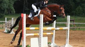 underweight horses solutions for the hard keeper the 1